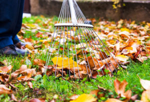 A homeowner rakes fall leaves