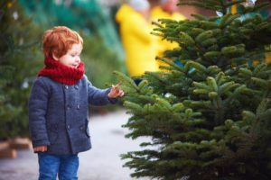 A young boy looks at a Christmas tree from a tree farm